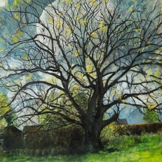 kath-wallace-artist-painting-historic-oak-tree